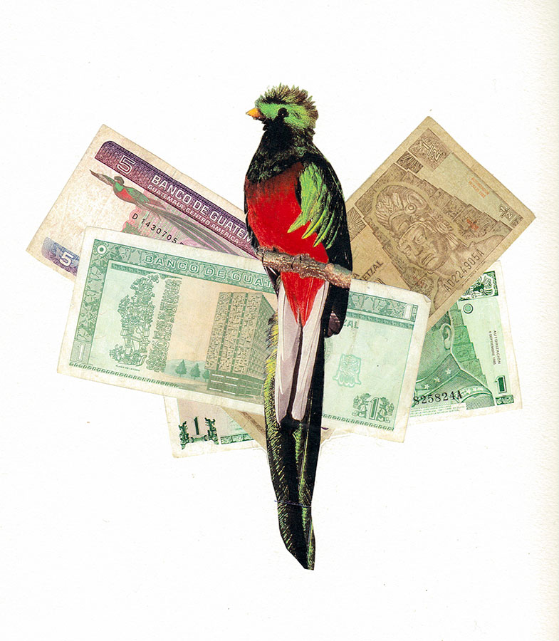 Quetzal Bird & Currency
